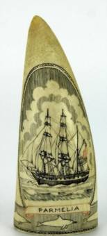 Whale tooth scrimshaw 'Parmelia' by Jesper Rasmussen depicting the ship Parmelia, with a banding of dolphins to the base, inscribed to verso 'Built at Quebec 1825 Swan River 1829, Jesper 1984, Albany'.